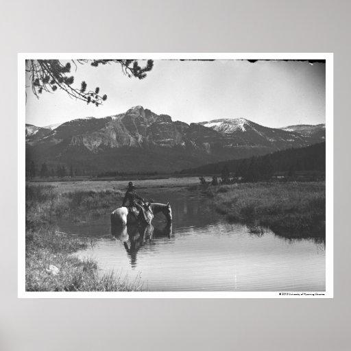 Vaquero y caballo en una charca impresiones