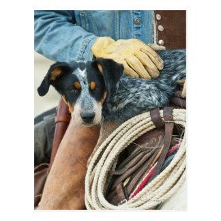 Vaquero y perro en caballo postal