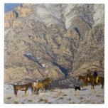 Vaquero y vaquera en los caballos que miran la man azulejos