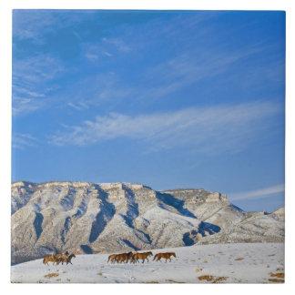 Vaqueros con los caballos oídos hablar azulejo cuadrado grande