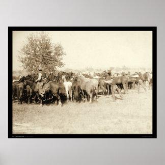Vaqueros Roping una manada de los caballos SD 1887 Posters