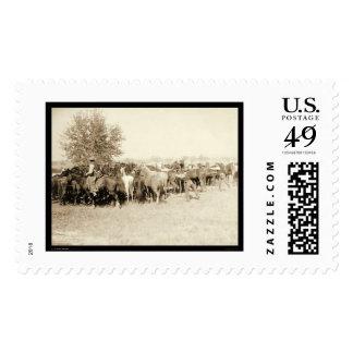 Vaqueros Roping una manada de los caballos SD 1887 Sello