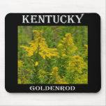 Vara de oro de Kentucky