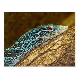 Varanus Azul-Manchado Macraei del monitor del árbo