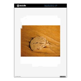 vare, dólar de arena, ondas, arena iPad 2 calcomanía