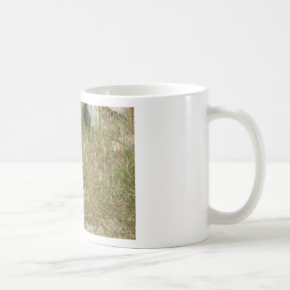 Variable Oystercatcher Coffee Mug