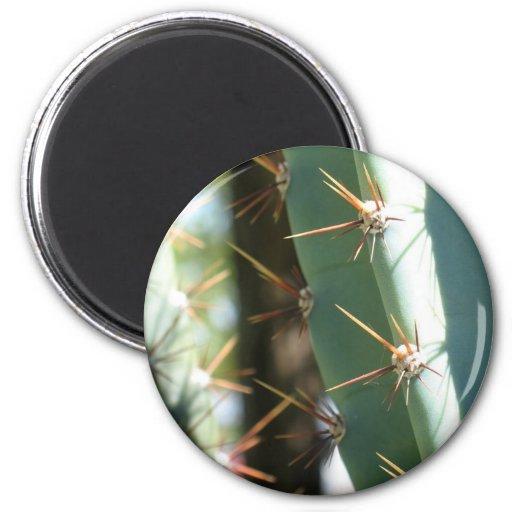 Varias espinas en un cactus imán de frigorifico