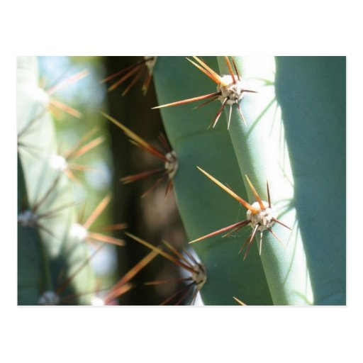 Varias espinas en un cactus tarjetas postales