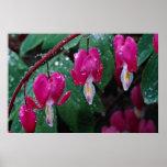 Varias flores de la planta y del agua del corazón  impresiones