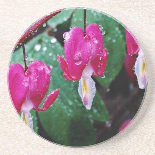 Varias flores de la planta y del agua del corazón  posavasos diseño