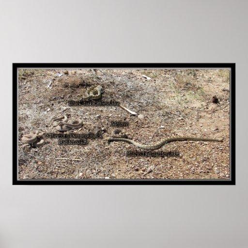 Variedad de congreso, serpientes de cascabel de Ar Póster