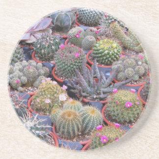 Variedad de pequeño fondo del cactus posavasos cerveza