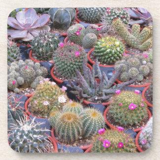 Variedad de pequeño fondo del cactus posavasos de bebidas
