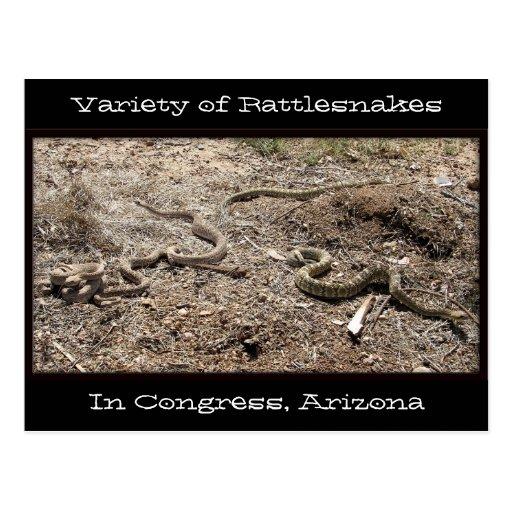 Variedad de serpientes de cascabel en el congreso tarjeta postal