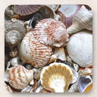 Variedad de Shell Posavasos