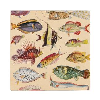 Variedades de pescados posavasos de madera