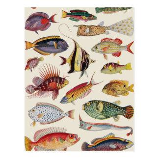 Variedades de pescados tarjetas postales