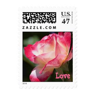 Variegate Rose Love Template Postage