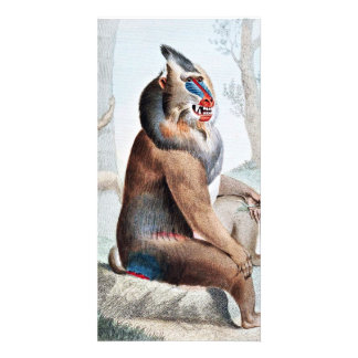 Variegated Baboon Vintage Art Card