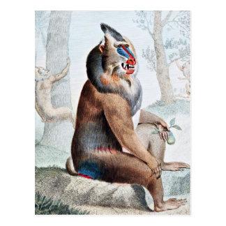 Variegated Baboon Vintage Art Postcard