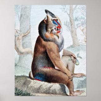 Variegated Baboon Vintage Art Poster