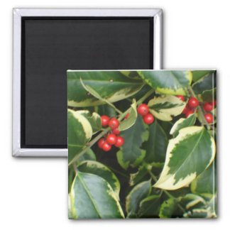 variegated holly refrigerator magnets