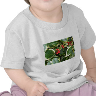 variegated holly t shirt