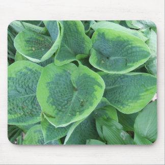 Variegated Hosta Light Green Dark Green Leaves Mouse Pad