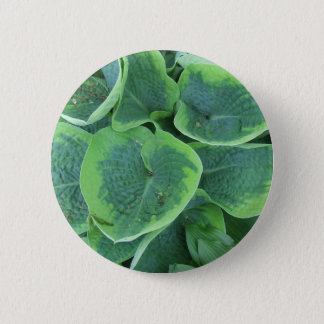 Variegated Hosta Light Green Dark Green Leaves Pinback Button