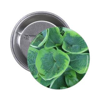 Variegated Hosta Light Green Dark Green Leaves Pinback Button