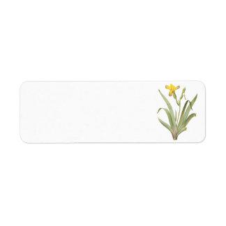 variegated iris(Iris variegata) by Redouté Return Address Label
