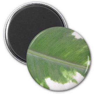 Variegated Leaf Fridge Magnets