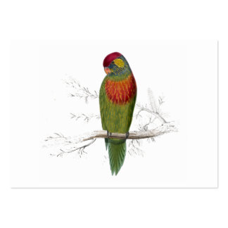 Variegated Parrakeet by Edward Lear Large Business Card