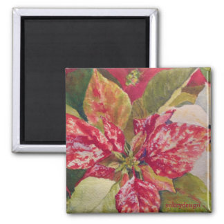 Variegated Poinsettia Magnet