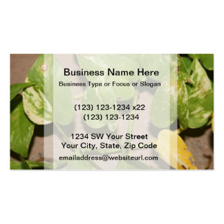 Variegated pothos vine against beige background Double-Sided standard business cards (Pack of 100)