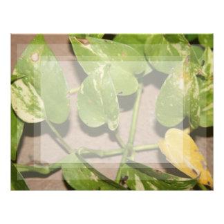 Variegated pothos vine against beige background letterhead