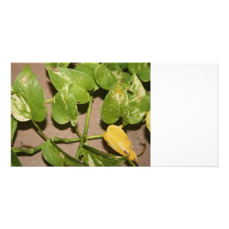 Variegated pothos vine against beige background personalized photo card