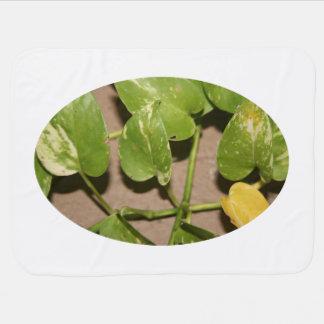 Variegated pothos vine against beige background receiving blanket