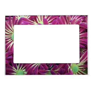 Variegated Purple Aster Flower 5x7 Magnetic Frame