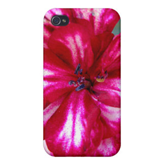 Variegated red flower covers for iPhone 4