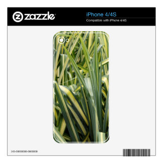 Variegated Sedge Grass Skins For iPhone 4