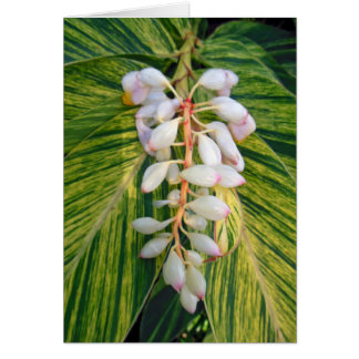 Variegated Shell Ginger Card