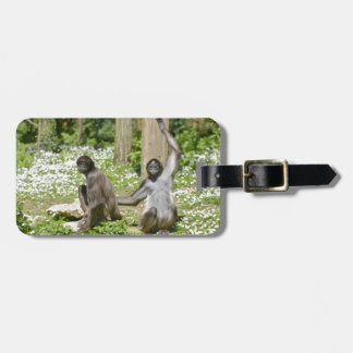 Variegated spider monkeys on grass luggage tag