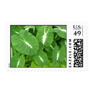 Variegated Taro Stamp