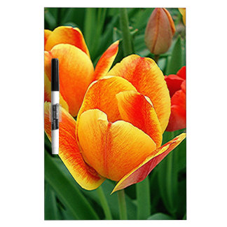 Variegated Tulips by E. Lewis Evans Dry Erase Board