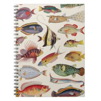 Varieties of Fish Notebooks