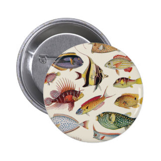 Varieties of Fish Pinback Button