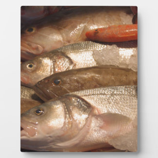 Variety of Fresh Fish Seafood on Ice 2 Plaque