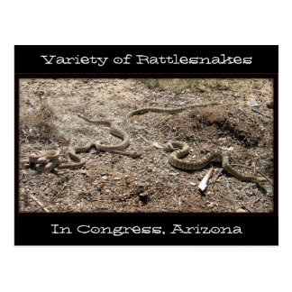 Variety of Rattlesnakes In Congress AZ... Post Card