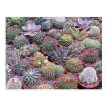 Variety of small cactus background postcard